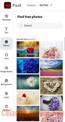 Kho hình của Adobe Spark